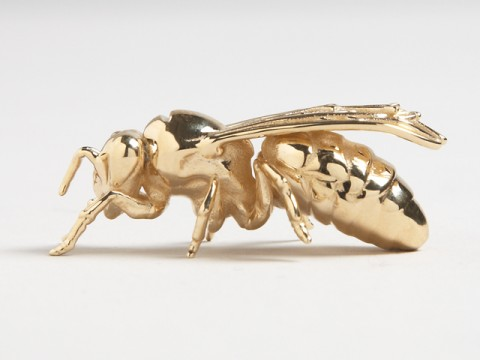 gold-top-wasp