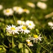 flowers-summer-grass-meadow-large