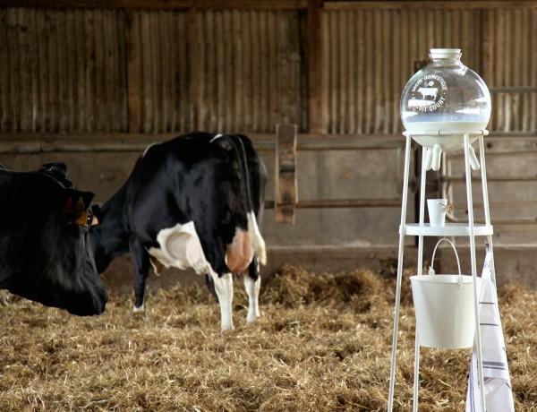 120-2015-vache-a-lait-55designstudio-vache-domestique-05hd